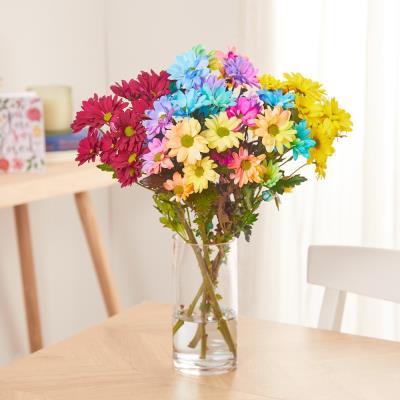 The Rainbow Chrysanthemums
