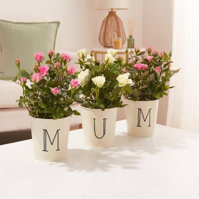 The Mum Rose Pots
