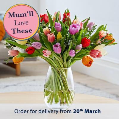 The Luxury 50 Pink Tulips