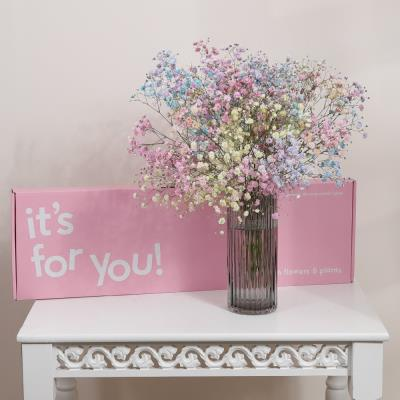 The Letterbox Candyfloss Gypsophilia