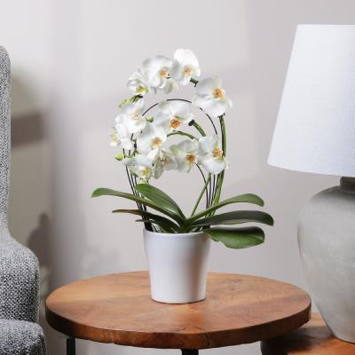 The White Cascade Orchid