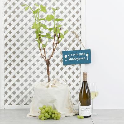 The Grape & White Wine Gift Set