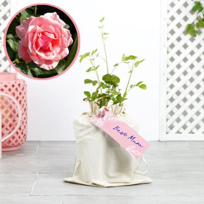 The Best Mum Pink Outdoor Rose