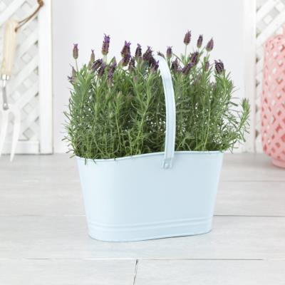 The Outdoor Lavender Duo