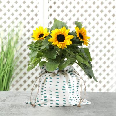 The Outdoor Sunflower Plant