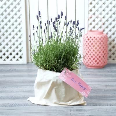 The Bee Happy Outdoor Lavender