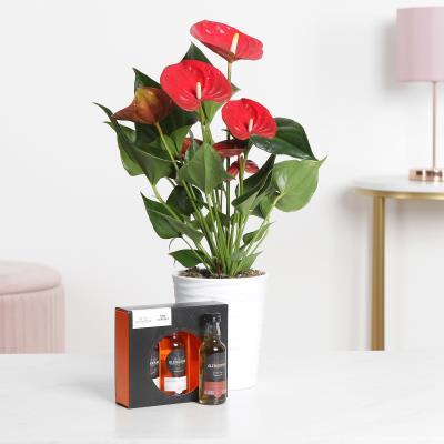 The Anthurium & Whisky Gift Set