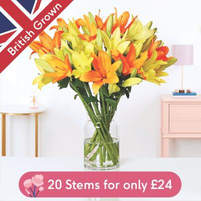 The Arrange at Home British Mixed Lilies