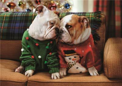 Bulldogs In Jumpers Personalised Merry Christmas Card