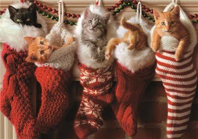 Cute Cats In Santa Stockings Christmas Card