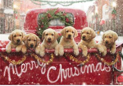 Six Dogs Christmas Greetings Card