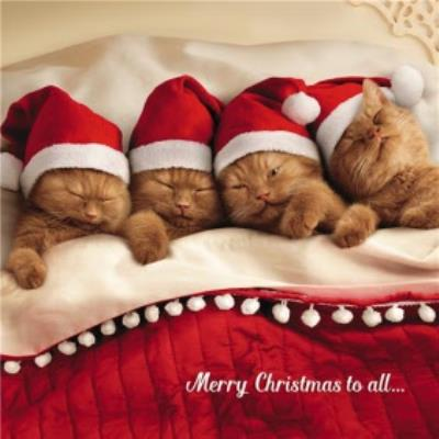Four Kittens Christmas Greetings Card