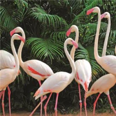 Flock Of Flamingos And Tropical Palms Card