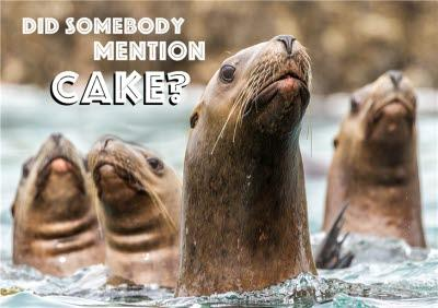 Bunch Of Seals Did Someone Mention Cake Card