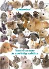 Personalised Name You Are As Cute As 100 Baby Rabbits Card