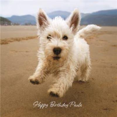 Terrier Birthday Card