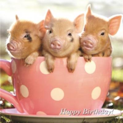 Teacup Pig Birthday Card