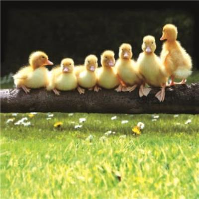 Seven Little Ducklings Personalised Card