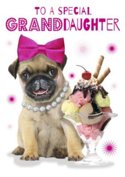 Cute Pug Puppy With Ice Cream Sundae Granddaughter Birthday Card
