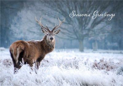 Christmas Card - Season's Greetings - Snow - Deer