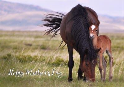 Horses In The Countryside Cute Happy Mother's Day Card