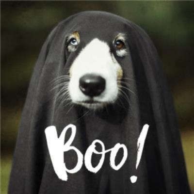 Doggie Ghost Halloween Card