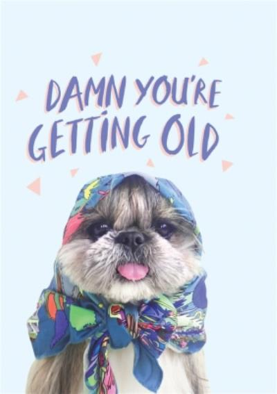 Jolly Awesome Damn Your Getting Old Birthday Dog Card