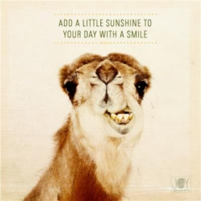 Cheeky Camel Add Sunshine To A Day With A Smile Card
