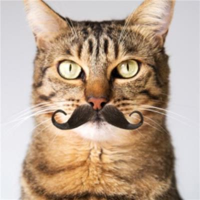 Cool Cat With A Moustache Card