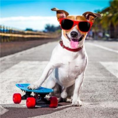 Cool Skateboard Dog In Sunglasses  Card