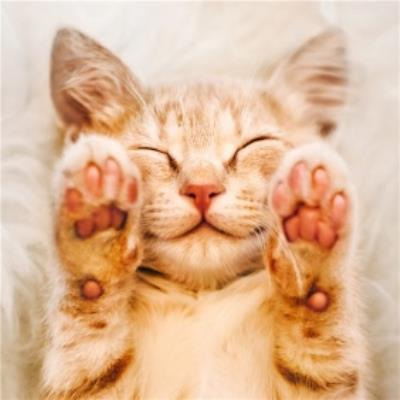 Cute Kitten Holding Up Paws Card