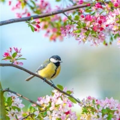 Photographic Cherry Blossom Tree Bird Card