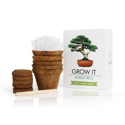 Grow It Bonsai Tree Plant