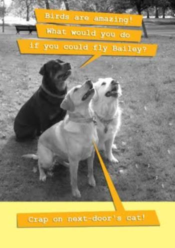 Funny Dog Birthday Card Moonpig