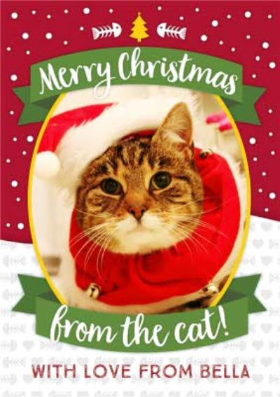 Merry Christmas From The Cat Photo Upload Card