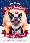 Merry Christmas From The Dog Photo Upload Card