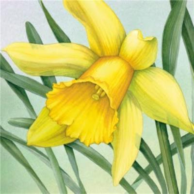 Royal Mail Art Greetings card - Daffodil flower