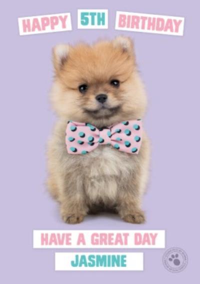 Studio Pets Birthday Card Pomeranian Puppy with a Bow-tie