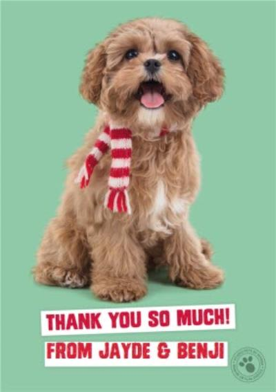 Studio Pets Christmas Card Thank you so much!