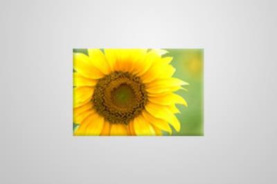 Eco Canvas 61cm x 41cm