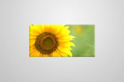 Eco Canvas 61cm x 31cm