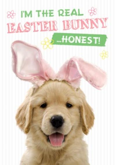 Adorable Puppy I Am The Real Easter Bunny Card