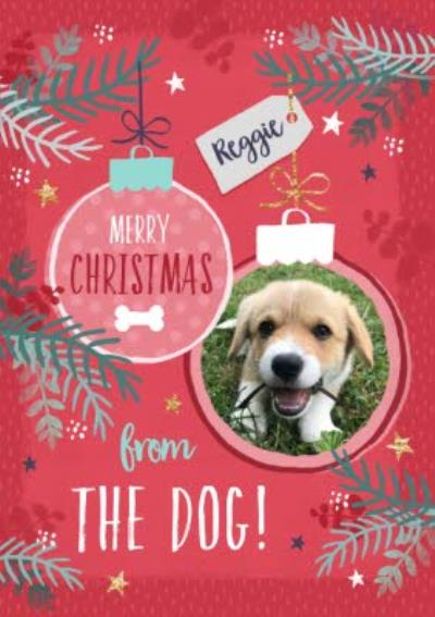 Studio Sundae Merry Christmas From the Dog Photo upload Christmas Card