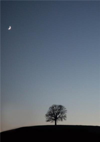Photo Of Tree On Hill Night Time Scene Card