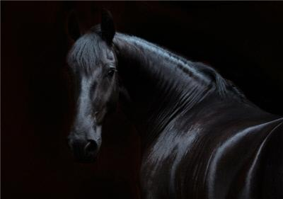 Photo Of Black Horse Card
