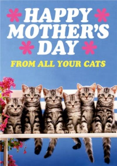 Dean Morris From All The Cats Mother's Day Card