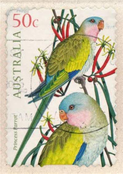 Tropical Bird Stamp Card