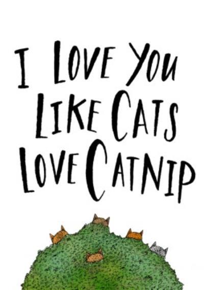 I Love You Like Cats Like Catnip Funny Card