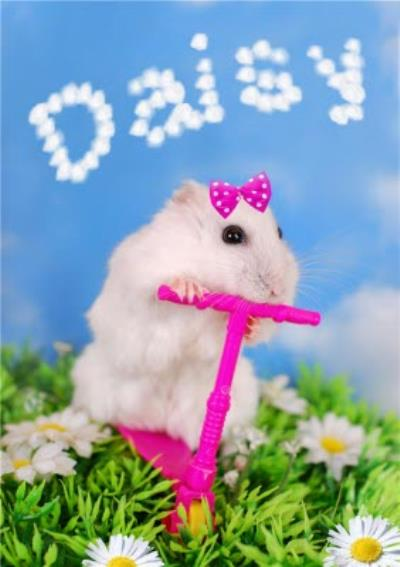 Hamster On A Pink Scooter And Personalised Name In The Clouds Card
