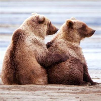 Cute Hugging Penguins Card